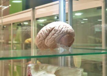 beyin implantları hafıza üzerinde olumlu etki sağlıyor