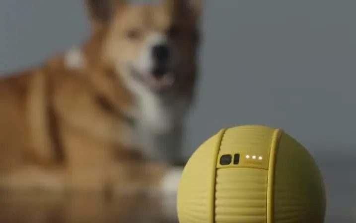 Samsung Ballie kişisel asistan