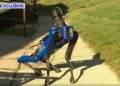 Boston Dynamics'in robot köpeği Spot, New York polisi oldu