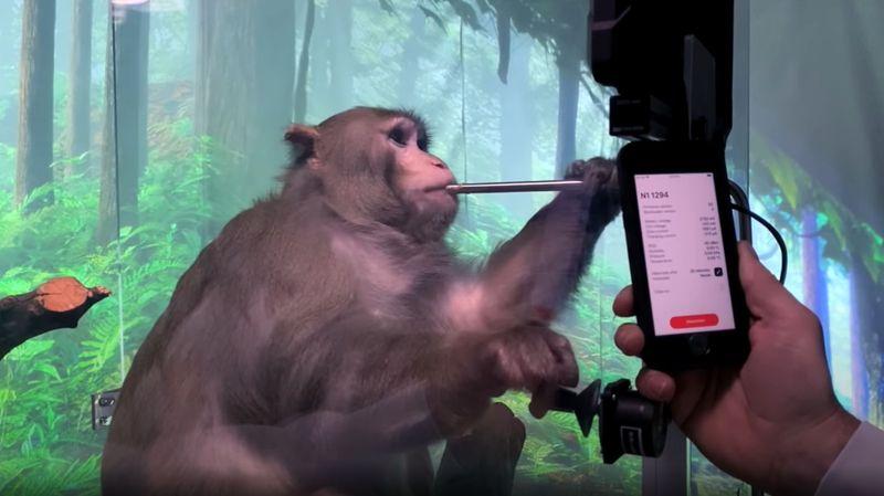 Neuralink'in ilk ürünü, zihnin gücüyle bir cep telefonu kullanmamızı sağlayacak