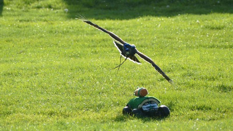 Kuş anatomisini taklit eden yardım drone'ları gökyüzünde