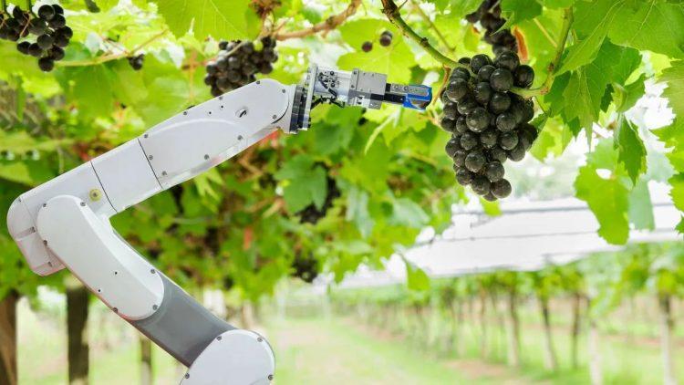 Dünyanın ilk tam otomatik çiftlik projesinin testleri başladı