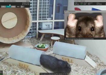 Kripto ticareti yapan hamster, Bitcoin'den çok kazandırdı